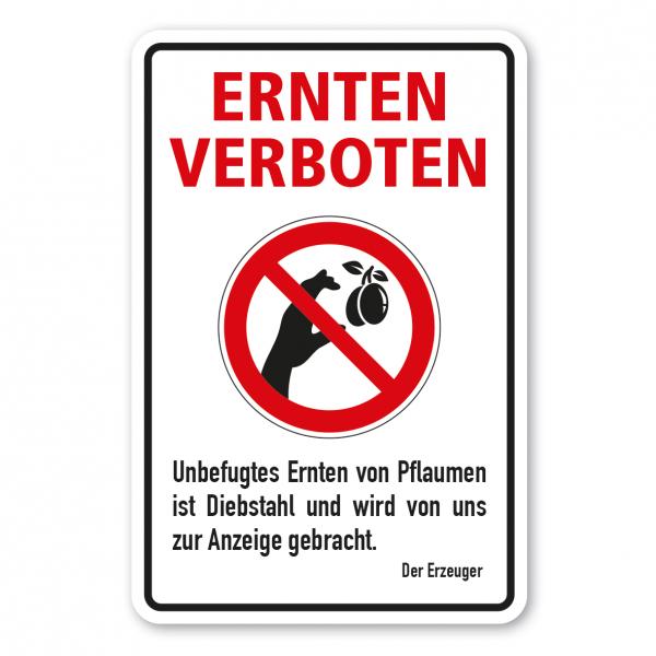 Ernteschild / Verbotsschild Ernten verboten - Unbefugtes Ernten von Pflaumen ist Diebstahl und wird von uns zur Anzeige gebracht – mit Verbotszeichen Pflaumen